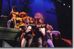Photo of cast of Boulder's Dinner Theatre's Cats